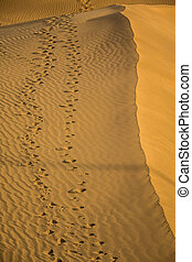 Footsteps on the sand dunes