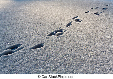 Footsteps on the snow in winter