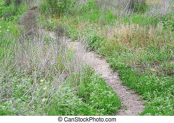 footway in the plants of old garden in summer