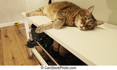 footwear., table chevet, shoes., mensonges, couloir, chat