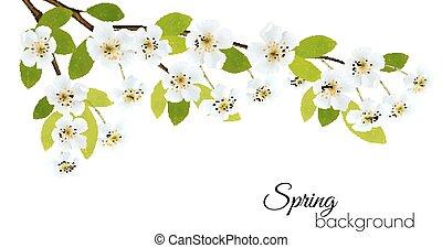 forår, baggrund, hos, hvid, flowers., vector.