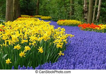 forår blomstr, seng, ind, keukenhof