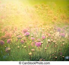 forår, blomstrede, baggrund
