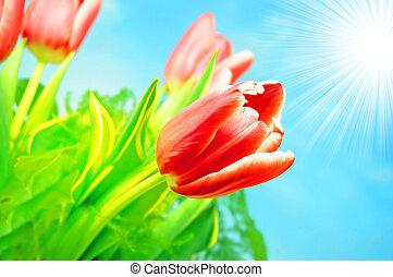 forår blomstrer, baggrund