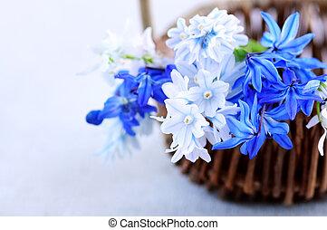 forår blomstrer, først