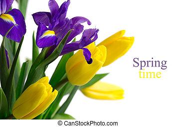 forår blomstrer, -, gul, tulipaner, og blå, iriser