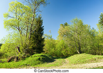 forår, grøn eng, solnedgang, skov