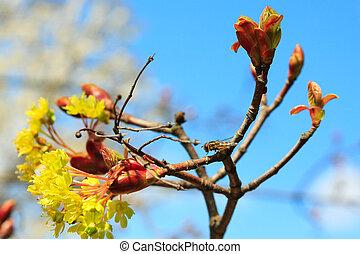 forår, natur