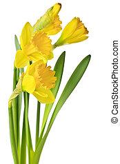 forår, påskeliljer, gul