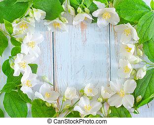 forår, ramme, jasmine, baggrund, hvid blomstrer