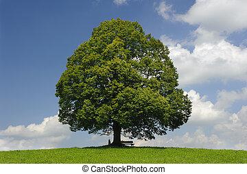 forår, singel, træ