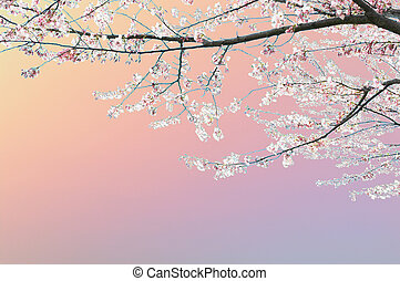 forår, træ