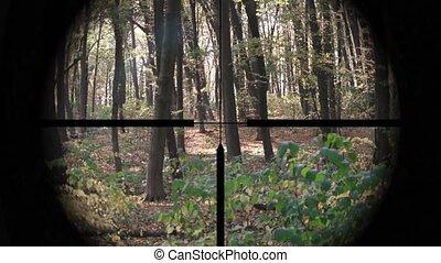 forêt, à feuilles caduques, perspective, portée, modéré, cibler