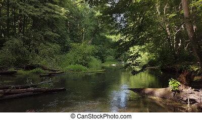 forêt, écoulement, rivière, par, calme