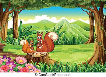 forêt, écureuils