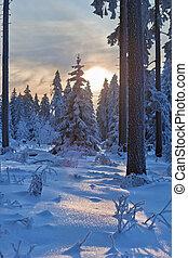 forêt, allemagne, hiver, montagnes, harz