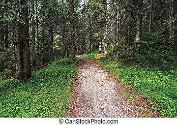 forêt, alpin