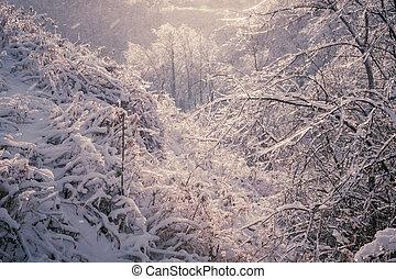 forêt, après, hiver, orage, glace