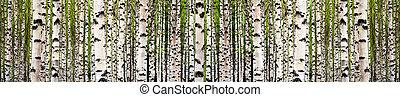 forêt arbre, bouleau