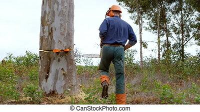 forêt arbre, coffre, 4k, vérification, bûcheron