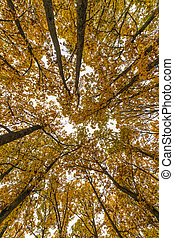 forêt, arbres automne, paysage