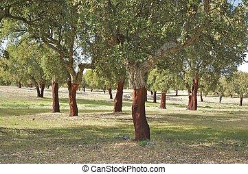 forêt, arbres, bouchon
