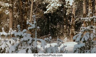 forêt, arbres hiver, neigeux