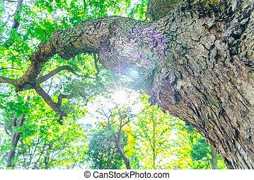 forêt, arbres