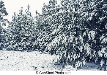 forêt, arbres, pin, neige