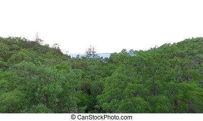 forêt, arbres, prise vue aérienne