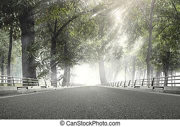 forêt, asphaltez route, vert