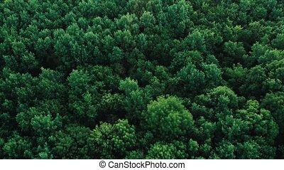 forêt, au-dessus, vue, vert