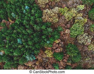 forêt automne, au-dessus