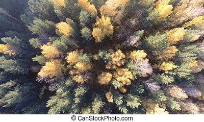 forêt automne, au-dessus, vue