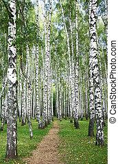 forêt automne, burch, chemin