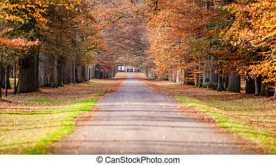 forêt automne, chemin
