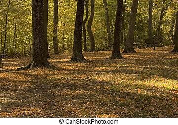 forêt automne, clairière