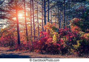 forêt automne, feuille