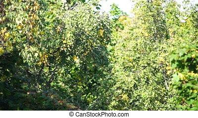 forêt automne, foyer sélectif