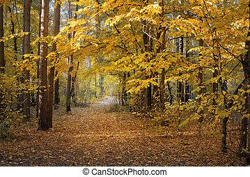 forêt automne, jour