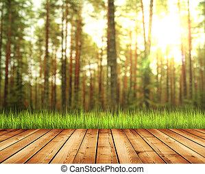 forêt automne, lumière soleil