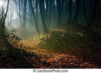 forêt automne, matin