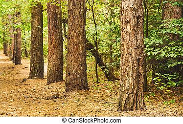 forêt automne, paysage, perspective