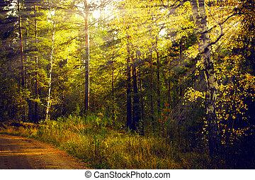 forêt, automne, paysage., sunrays, morning., magique