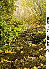 forêt automne
