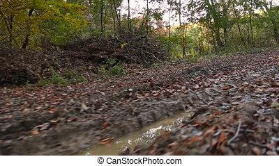 forêt automne, route, marais