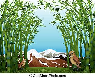 forêt, bambou, vue