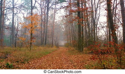 forêt, bourdon, faire, lent, automne, rayons soleil, par, leur, voler, fog., dawn., manière