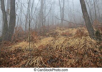 forêt, brouillard