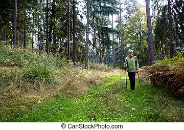 forêt brumeuse